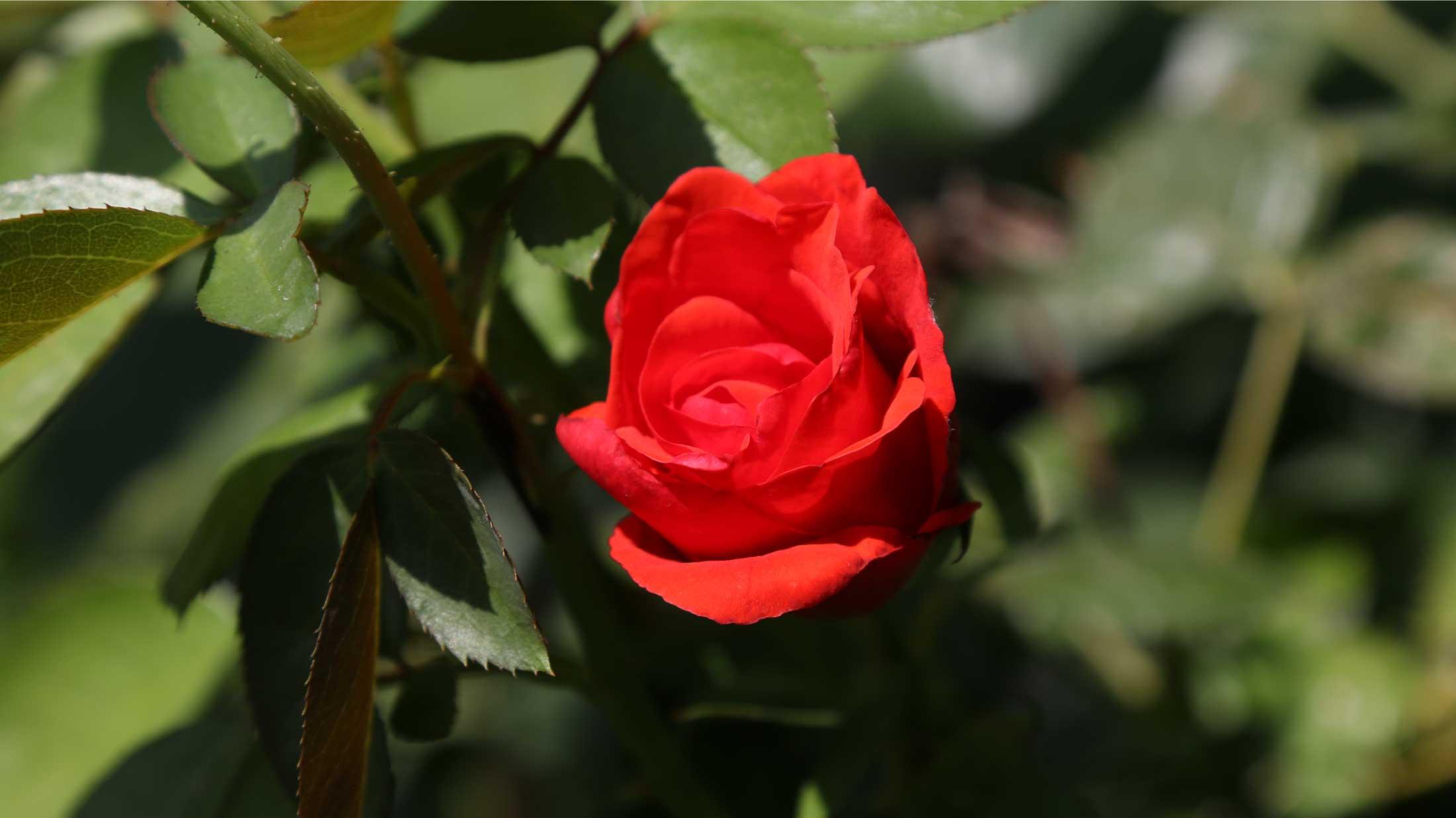 Il Giardino dedicato ad Adriana Spazzoli (Mapei)